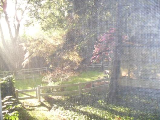 spring rain through my window