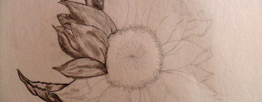 sunflower a work in progress