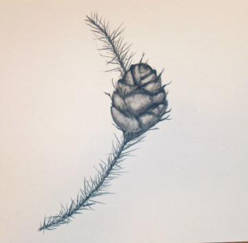 pine cone_04_19_12