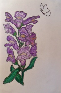 purple snapdragon and white butterfly - medium charcoal pencil and color pencil with a touch of ink and pastel