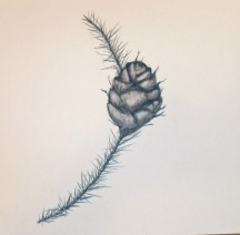 Pine Cone in Charcoal