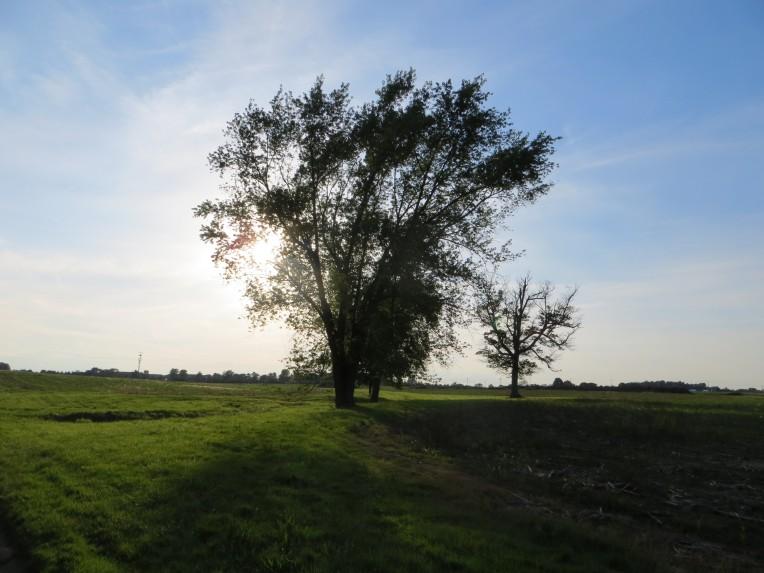 Trees alongside the Patterson Farm Driveway