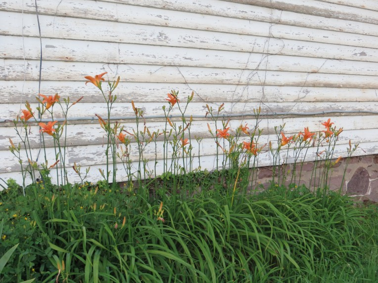 Flowers against old house, Patterson Farm, Yardley PA