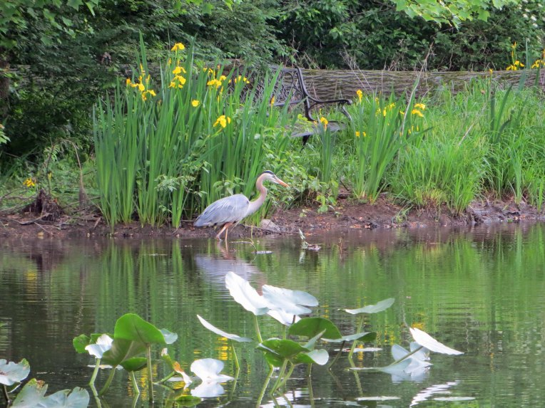 blue heron against a back drop of wild flowers