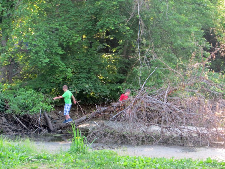boys playing on fallen trees