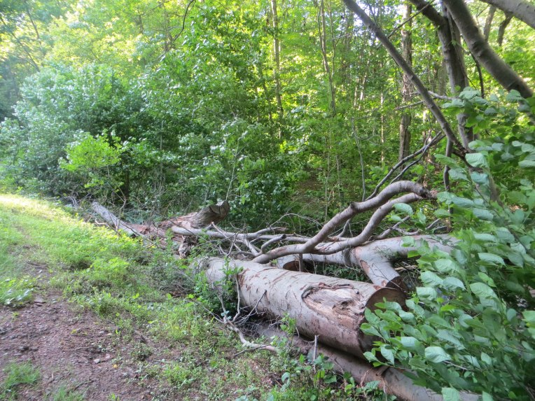 fallen trees along the canal