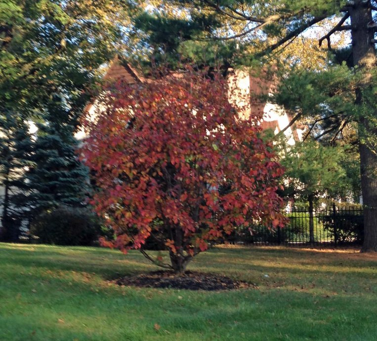Autumn Treee