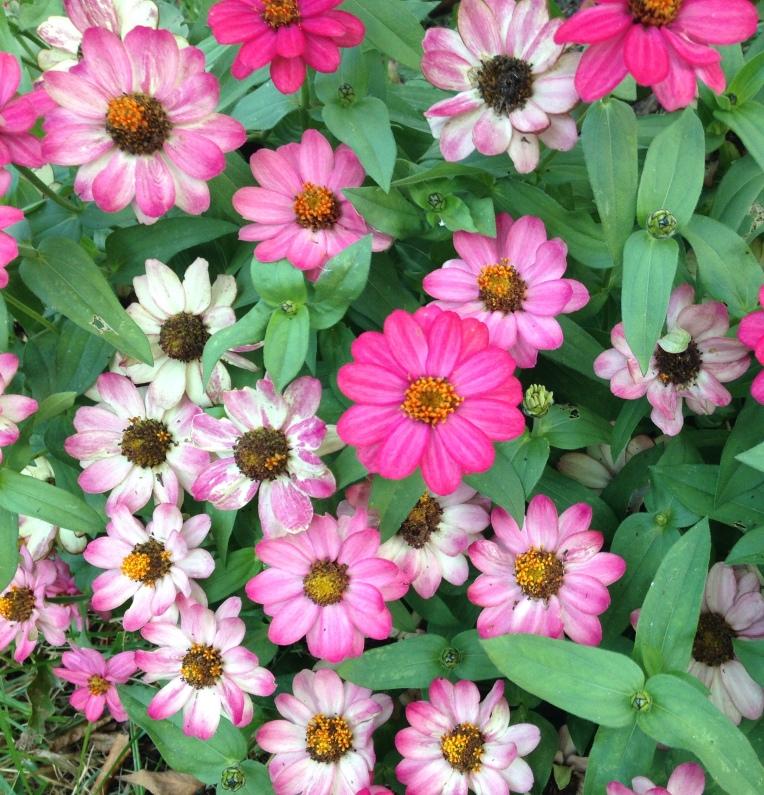 flower garden doodle journal inspiration