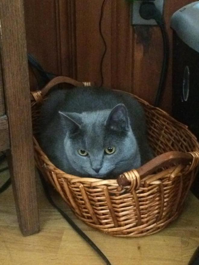 Mia in a basket