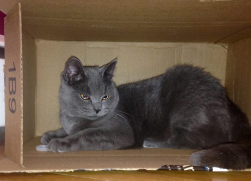 mia in a cardboard box