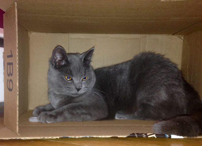 mia in a cardboard box