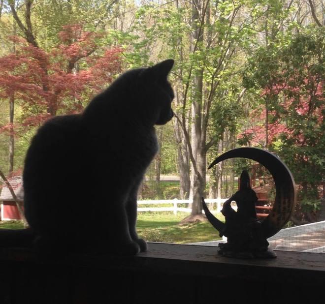Mia sitting on the porch window sill