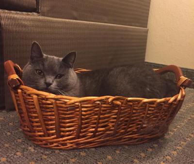hotel-basket