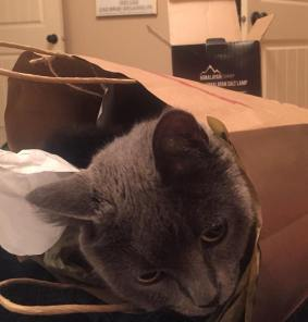 Mia in a bag