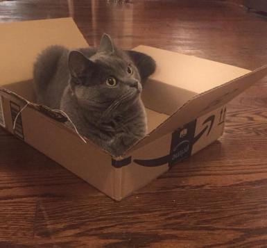 Mia in a box