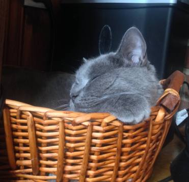 Mia sleeping in her basket